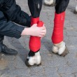 Stock Photo: Bandaging of horses' legs.