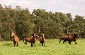 马跑过草地. — 图库照片
