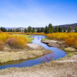 Riverbanks in Summer color — Stock Photo
