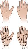 Kadın, adam hatları masaj ile eller — Stok Vektör