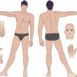 Full length (front & back) views of a standing naked man — Stock Vector