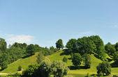árvores na colina — Fotografia Stock