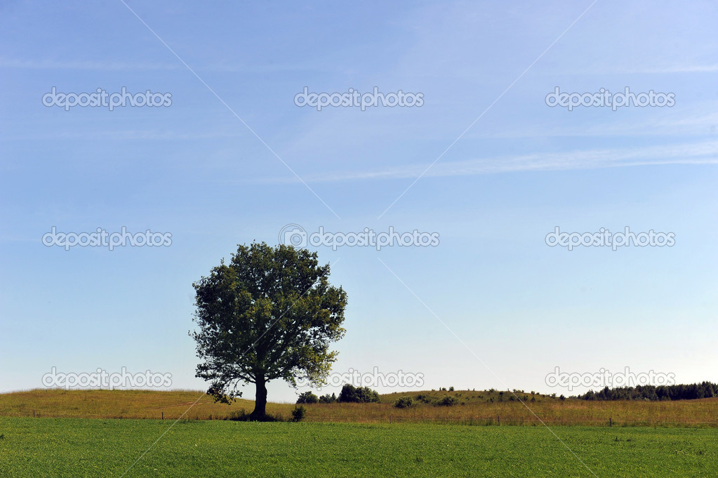 Summer landscape. deciduous tree on a green field  Stock Photo #12346995