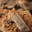 Cocoa mass and cocoa powder - Stock Photo