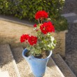 Stock Photo: Andalusian geranium