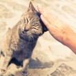 Hand stroking satisfied cat — Photo