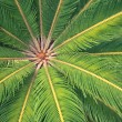 Palm tree leaves, closeup view - 图库照片