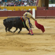 Постер, плакат: Bullfighter in the bullring