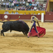 Постер, плакат: Bullfighter in the arena