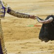 Royalty-Free Stock Photo: Bullfighter touching the horn of the bull.