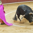 Постер, плакат: Bullfighting