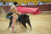 A matador fighting in a typical Spanish bullfight. — Stock Photo