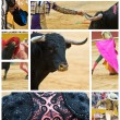 Collage about bullfighting. — Stock Photo