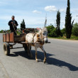 Carriage horse transportation in albania , may 2012, road to Lusnje in Albania — Stock Photo