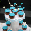 Blue cupcakes — Stock Photo