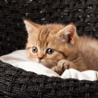 Cat sleeping in the basket - Stockfoto