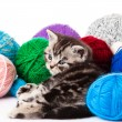 Kitten with balls of threads. little kitten on white background. — Stock Photo