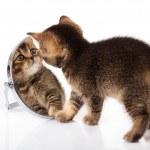 Kitten with mirror on white background. kitten looks in a mirror — Stock Photo #11390671