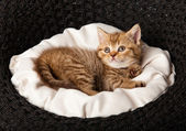 Kitten sleeping in the basket — Stock Photo