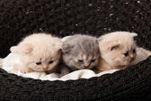 Kittens in the basket — Stock Photo