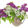 Isolated white purple lilac branches — Foto Stock
