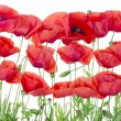 Stock Photo: Red poppies border