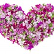 Pink floral lovely girl heart concept — Stockfoto