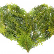 Evergreen coniferous christmas trees heart isolated — Stock Photo #11589943