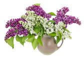 Isolated white purple lilac branches — Stock Photo