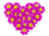Heart from pink daisies — Stock Photo