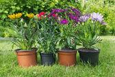 Seedlings of exotic flowers — Stock Photo