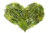 Evergreen coniferous christmas trees heart isolated — Stock Photo