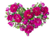 Pink roses heart isolated — Stock Photo