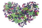 Forest berries heart — Stock Photo