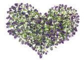 Oregano heart — Stock Photo