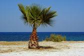 Palmy na pláži, ostrov zakynthos — Stock fotografie