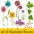 Set of illustrated cute flowers for your spring design - Stock Photo