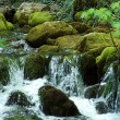 Stock Photo: Waterfall on mossy rocks