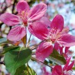 Beautiful pink spring flowers - Stock Photo