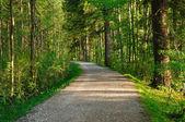Trayectoria del bosque — Foto de Stock