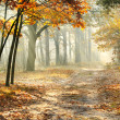 Stock Photo: Morning in autumn forest