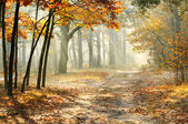 Morning in the autumn forest — Stock Photo