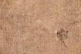Texture old canvas fabric — Stock Photo