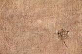 纹理旧帆布面料 — 图库照片