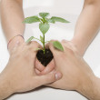 Royalty-Free Stock Photo: Hands holding young plant
