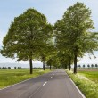 Beautiful road with trees — Stock Photo