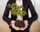 Businesswoman holding Bonsai tree — Stock Photo
