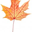 Leaf of maple — Stock Photo #11589718