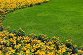 Flowerbed and lawn — Stock Photo