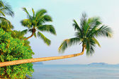 Tree and landscape in sentosa, Singapore — Stock Photo